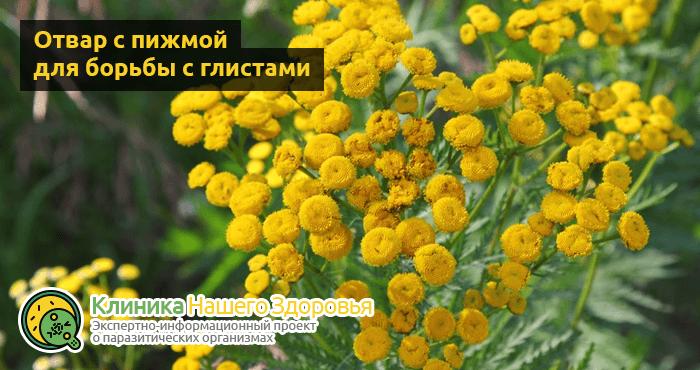 lechenie-glistov-narodnymi-sredstvami-12.png