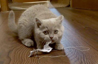 Котенок играет с бумажкой