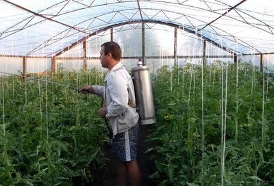 Обработка помидоров химикатами