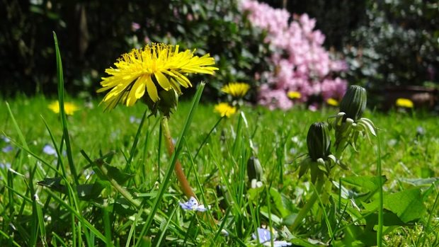 meadow-43467_640-e1485551610808.jpg