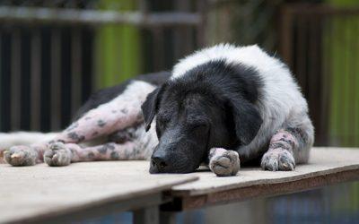 Нарушение сознания у собаки