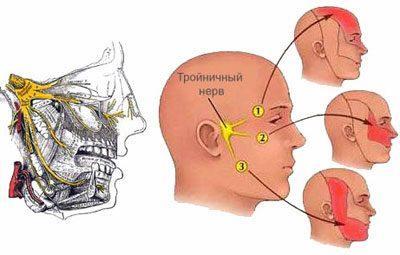 Местоположение троичного нерва