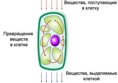 Метаболизм в клетке