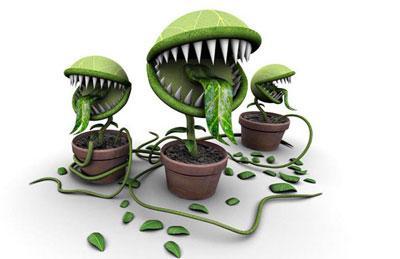 Воздействие ядовитых комнатных растений на человека