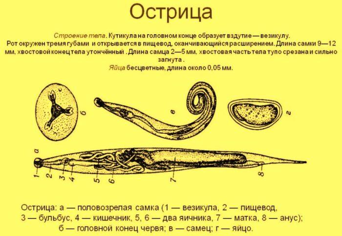 ostricy-1.jpg