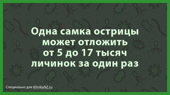 ostricy-citata-3.png