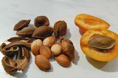 Свежие косточки абрикоса