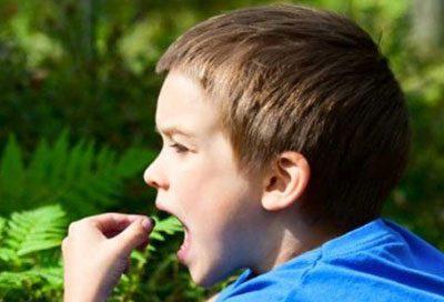 Ребенок ест ягоду