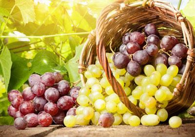 Можно ли отравиться виноградом