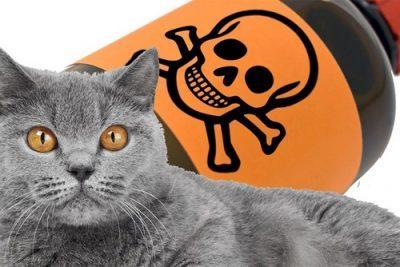 Отравление у кошек ядом
