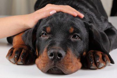 Особенности промывания желудка у собак в домашних условиях