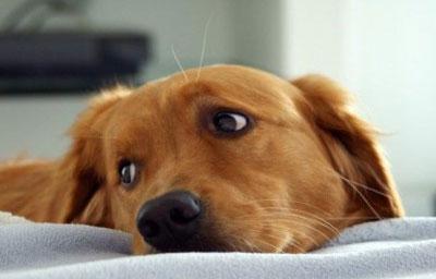 Вызываем рвоту у собак в домашних условиях