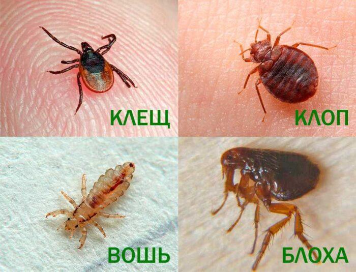 parazity-na-kozhe-nasekomie.jpg