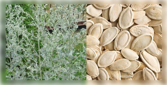 polyn-i-semena-tykvy.jpg