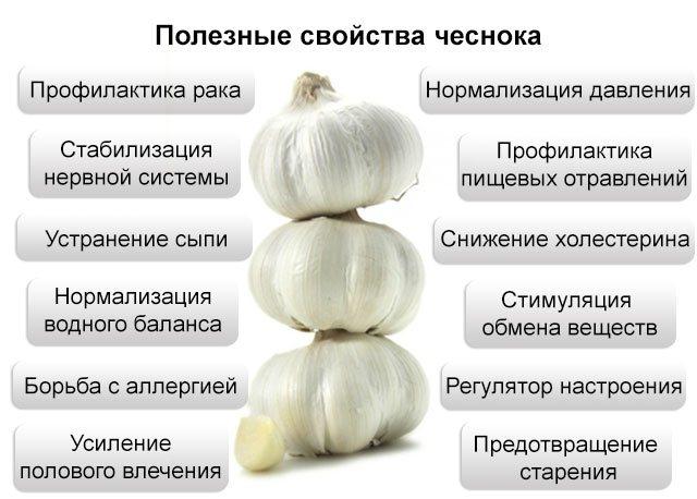 polza-chesnoka4.jpg