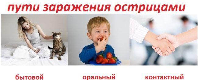 puti-zarazheniya-ostritsami.jpg