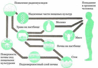 Попадание радиации в организм