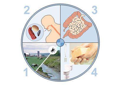 Источники кишечной инфекции