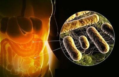 Опасная инфекция сальмонеллез: симптомы и особенности лечения у взрослых