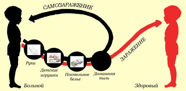 samozarazhenie-ehnterobiozom-1.jpg