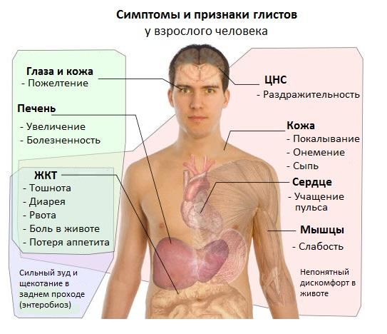 simptomy-glistov.jpg