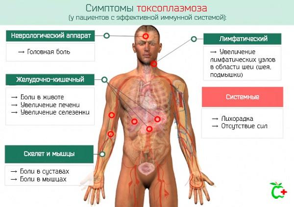 simptomy-toksoplazmoza.jpg