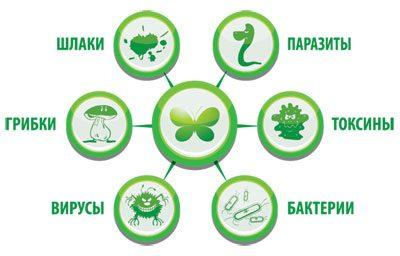 Загрязнение организма