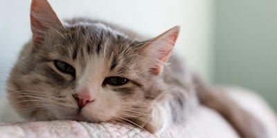 Слабость у кошки