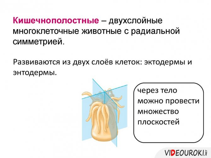 slide-165.jpg