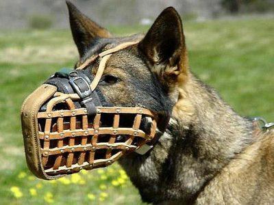 Выгуливание собаки в наморднике