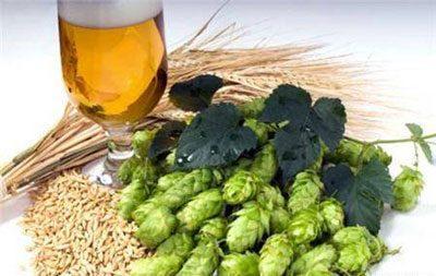 Вред и польза пива для здоровья мужчин и женщин
