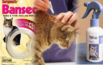Отравление кошек и собак средствами от блох