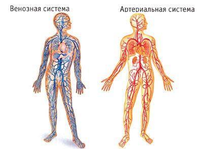 Что такое застой крови?  Что такое кислородное голодание (гипоксия)?