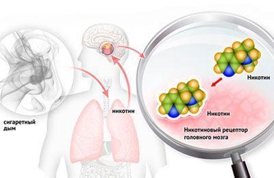 Действие никотина на организм