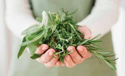 Травы для очищения