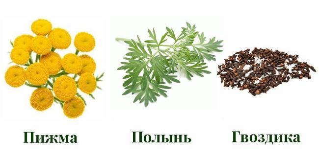 troichatka-10.jpg