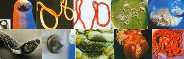 vidy-glistov-i-parazitov.jpg