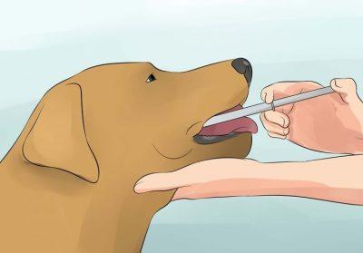 Промывание желудка собаке с помощью шприца